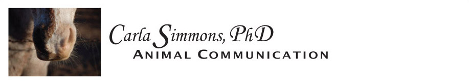 Carla Simmons, PhD, Animal Communication